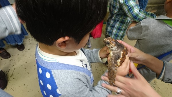 千葉県 観光 鴨川シーワールド 海亀 ウミガメの赤ちゃん