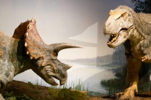 茨城県自然博物館 羽毛ティラノサウルス