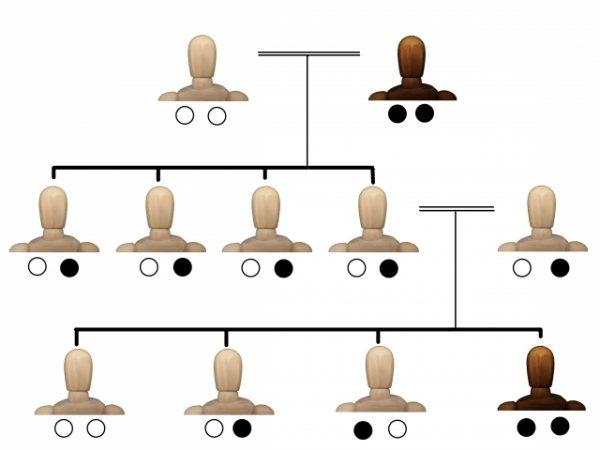 ご先祖様 家系図