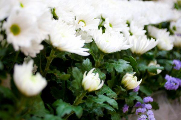 お墓参り 仏花