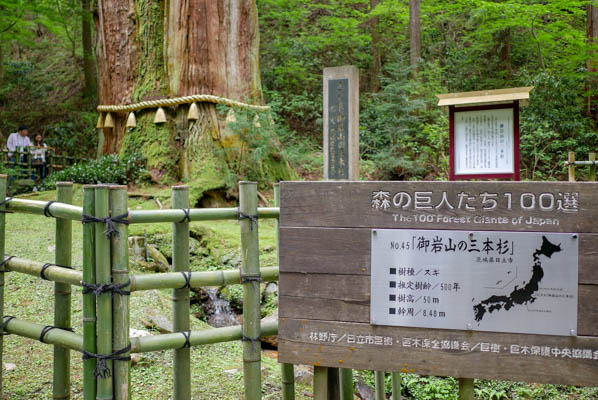 茨城県日立市御岩神社 ご神木
